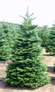 Noble Mountain Tree Farm